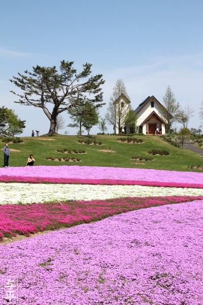 やくらいガーデン・シバザクラ・ビオラ・チューリップ・むすび丸花壇・宮城県・加美町・画像・仙台人が仙台観光をしてるブログ・与平