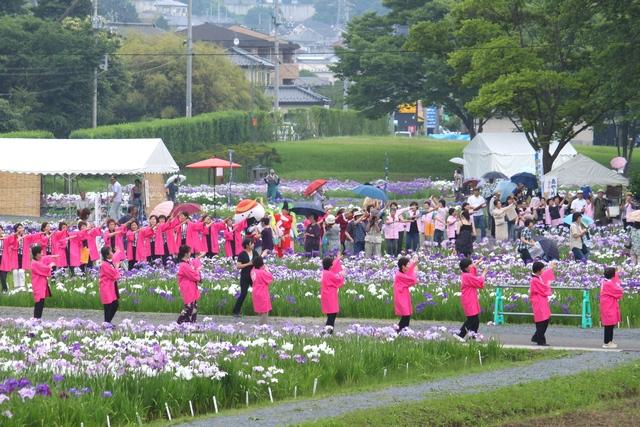 多賀城あやめ園・2010・アヤメの画像