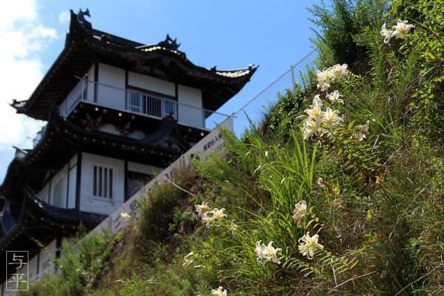ヤマユリ、山百合、宮城県・松島・日本三景展望台