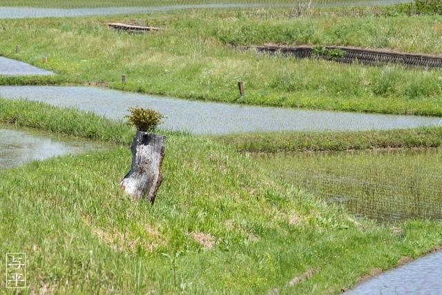 切り株の風景、宮城県白石市、画像、仙台人が仙台観光をしてるブログ、与平