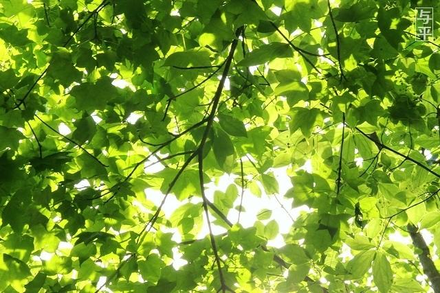 01 96 台原森林公園、宮城県仙台市.jpg