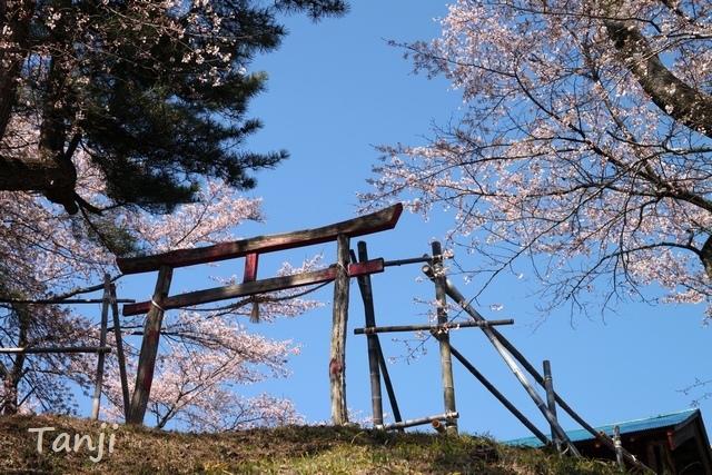 03 96 画像、桜、山津見神社、宮城県丸森町、sakura、Tanji.jpg