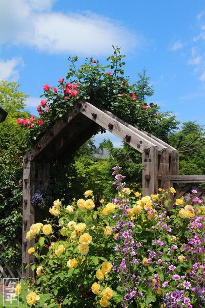 やくらいガーデン・バラ・宮城県・加美町・画像・仙台人が仙台観光をしてるブログ・与平