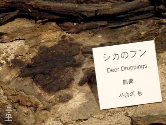 04 96 地底の森ミュージアム、富沢遺跡、宮城県仙台市、画像.jpg