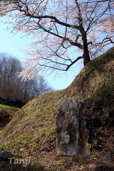 04 96 画像、桜、山津見神社、宮城県丸森町、sakura、Tanji.jpg
