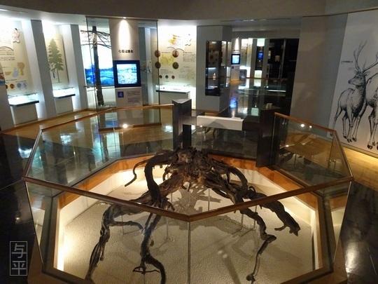 08 94 地底の森ミュージアム、富沢遺跡、宮城県仙台市、画像.jpg