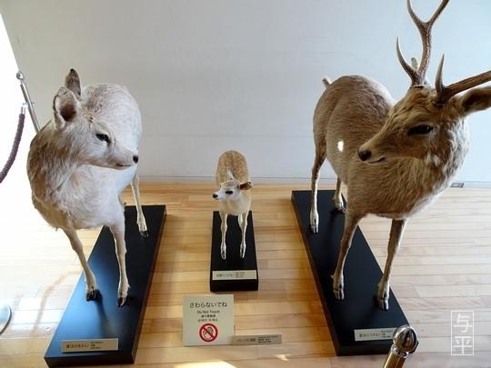 14 96 地底の森ミュージアム、富沢遺跡、宮城県仙台市、画像.jpg